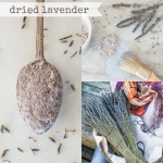 Dried-Lavender-Collage-1024x1024